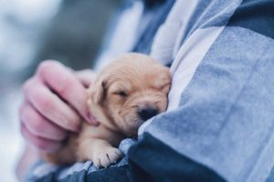 cute puppy in man arms