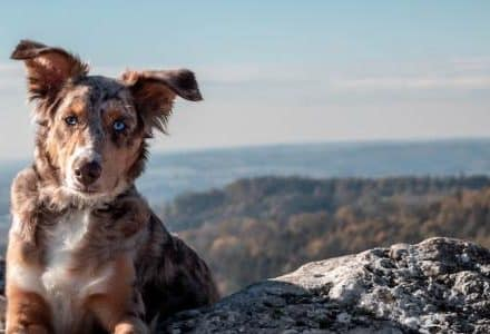 dog sitting on mountain with sea in background