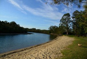 schuster park - Places to Take Your Dog in Brisbane