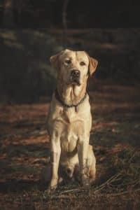 dog after a walk