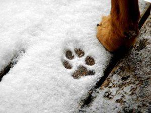 snow paw print - Pet Health Hazards