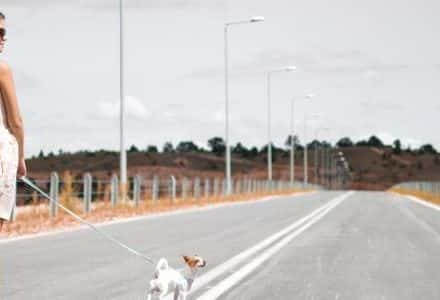 woman and small dog on lead walking on a road