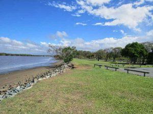 Tuckeroo Park - Places to Take Your Dog in Brisbane