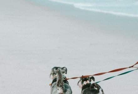 2 dogs walking on beach with leads on