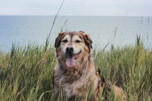 dog sitting panting on a beach cliff