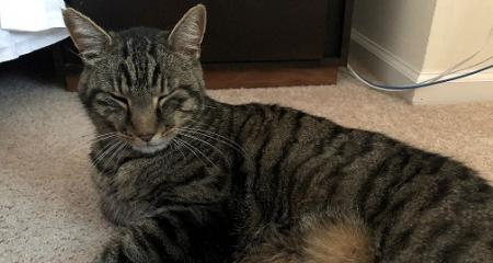 tabby cat laying on a carpet
