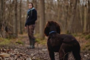 brown dog looking at owner in a forest