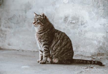 Tabby cat sat on concrete