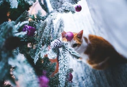 Keep your cat out of the Christmas tree