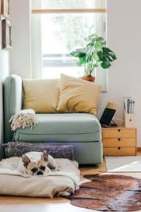 french bulldog lying on a dog bed