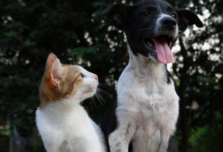 tabby cat sat next to a black and white dog