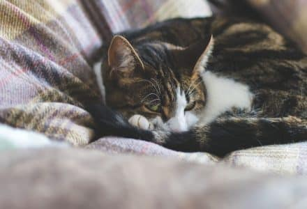 tabby cat curled up on a sofa