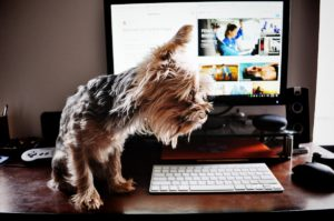working from home with your pets during lockdown