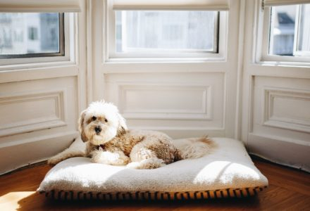 keep your dog entertained when you're stuck indoors