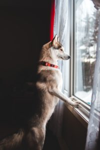 how to ease your dog's separation anxiety after lockdown