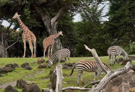best animal shows on iplayer, amazon prime & uktv play