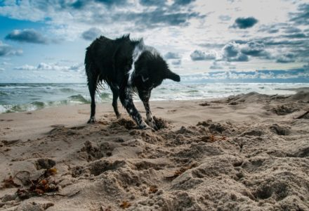 dog ban on UK beaches