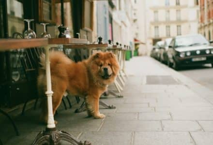 where to take your dog in france