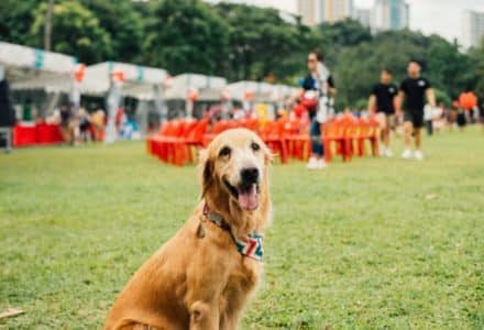 where to take your dog in Singapore