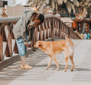 Places to take your dog in Cairo, Egypt