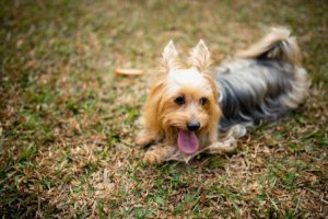 things to do with your dog in Singapore