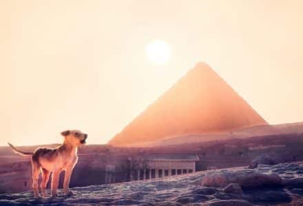 Where to take your dog in Cairo