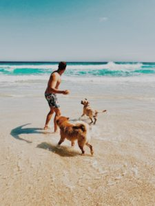 where to take your dog in cape town