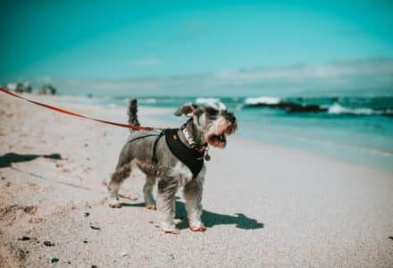 things to do with your dog in cape town