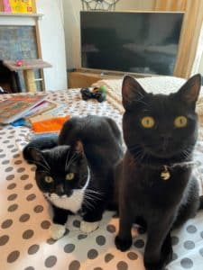 cats to new zealand