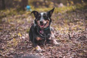dog friendly houston texas