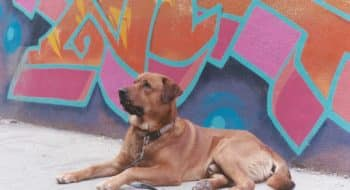 dog in toronto