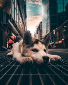what to do with your dog in Toronto