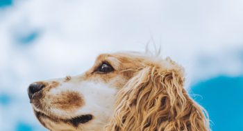 what to do with your dog in Malta