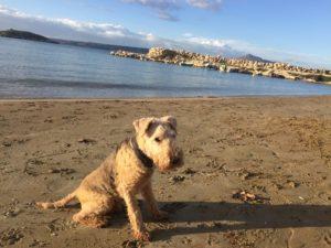 dog to crete