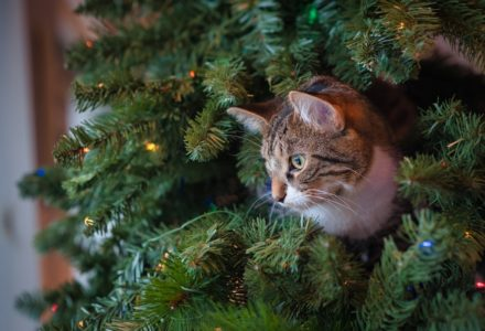festive plants that may harm your pet