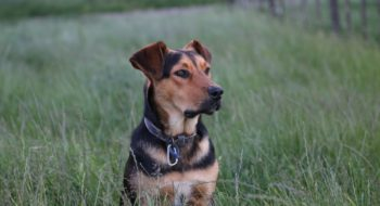 where to take your dog in cleveland ohio