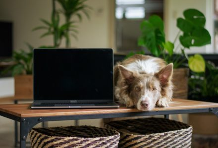 working from home with your pet