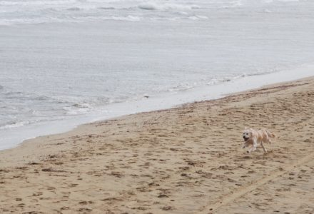 where to take your dog in Cyprus