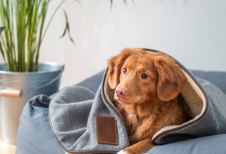 Have you got everything you need for your new pet?