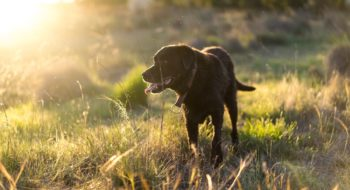 where to take your dog in Cairns