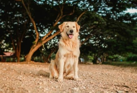 pet accounts you need to follow on TikTok
