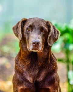 how to add years to your dog's life