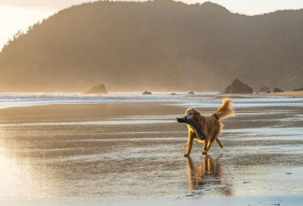 where to take your dog in Portland Oregon