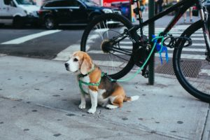 Things to do with your dog in New York