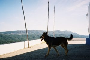 things to do with your dog in Portugal