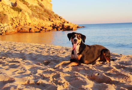 where to take your dog in Portugal