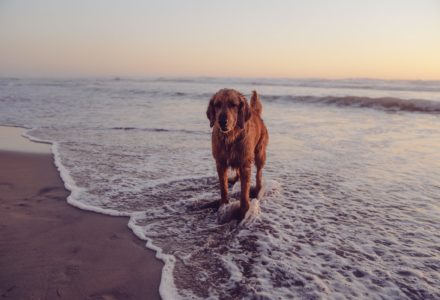 Where to take your dog in Miami