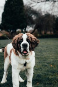what breed of dog should i get?