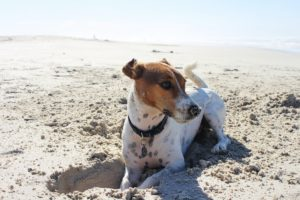 things to do with your dog in Menorca