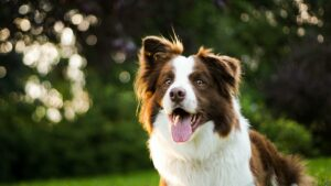 Things to do with your dog in Wellington, New Zealand